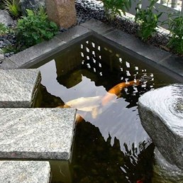 Contemporary Koi Pond