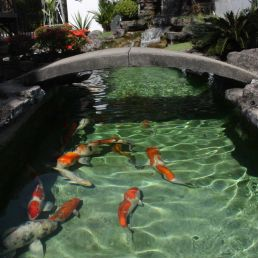 koi pond with stone bridge