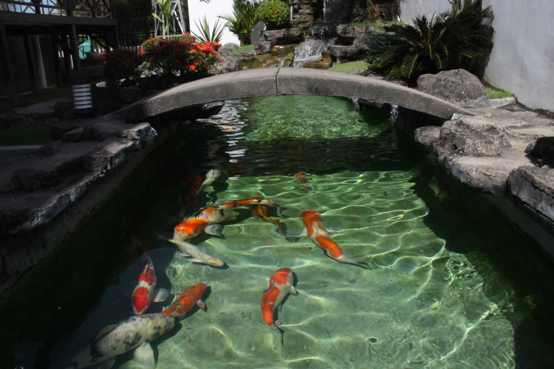 Testimonials customer feedback perfect ponds for Koi pond how to