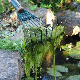 removing blanket weed algae from a garden pond