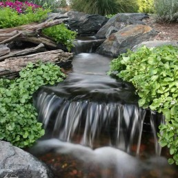 waterfall aeration and aquatic plant filtration