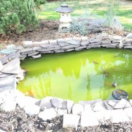 green pond water