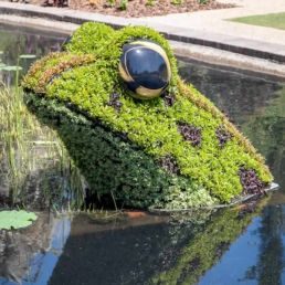 kiss a frog topiary