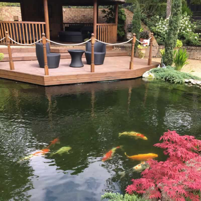 Perfect ponds design build water features perfect ponds for Koi pond maintenance near me