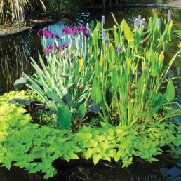 natural filtration plants for your pond