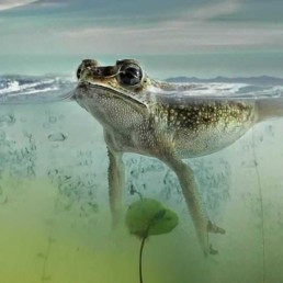 frog swimming in pond water treatments